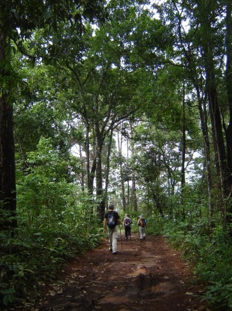 DSC07975 shady path