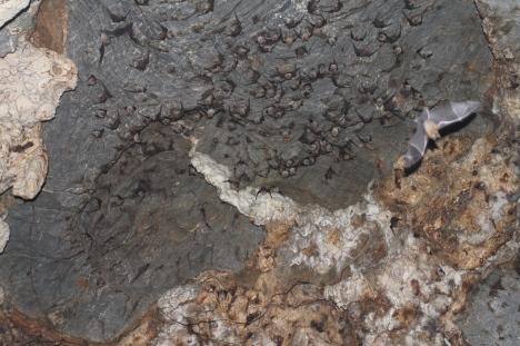 Chan's bat cave