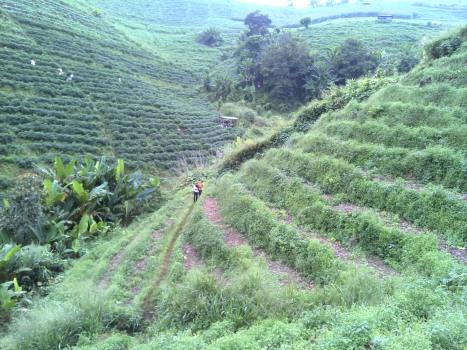 Farmer area