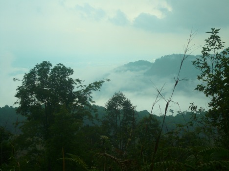 Doi Pui in the mist