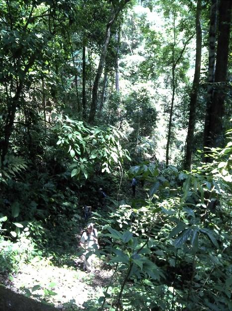 Back on a jungle track