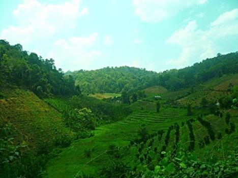The farmer area