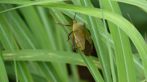 1. anotherbug