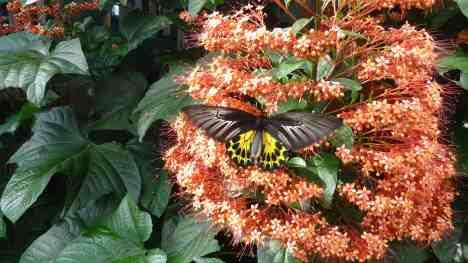 1. flutterby