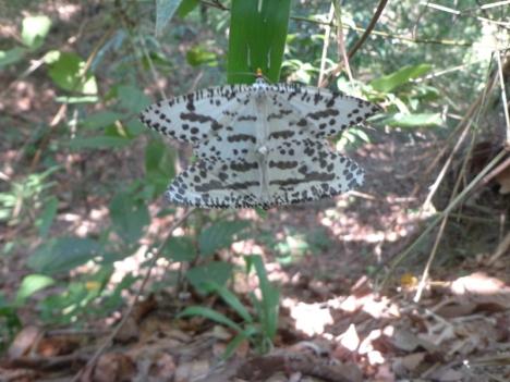 DSC06440 butterfly