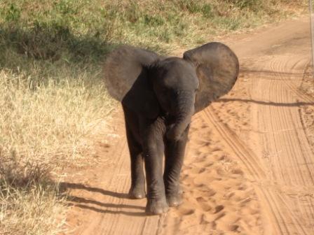 Elephant - Day 11