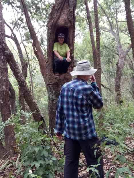 J tree 2